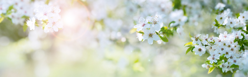 Chaque printemps, la nature refleurit… Et vous ?