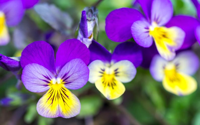 La plante qui lit dans vos pensées !