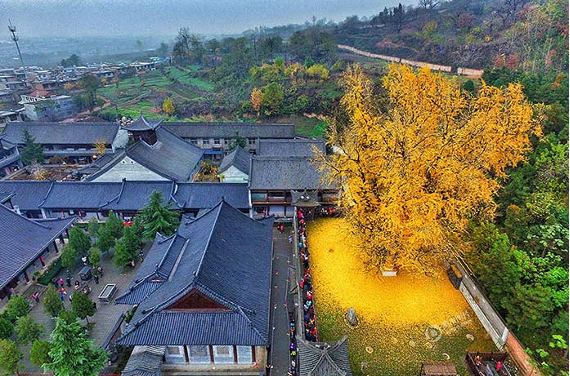 Le secret de l'arbre d'or